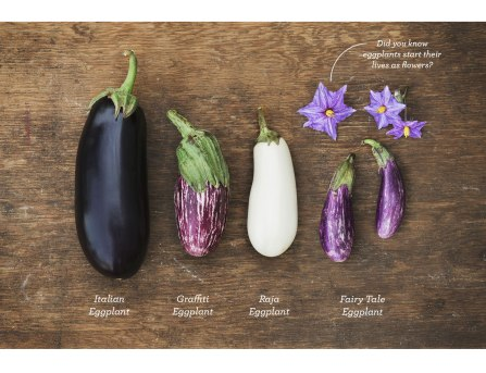 Fairytale-Eggplant-Slices_21