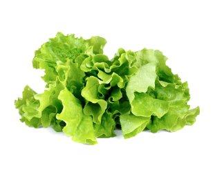 Lettuce_refill_1200x960