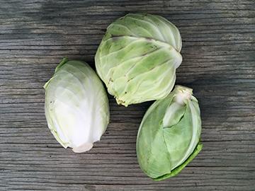 cabbage2020